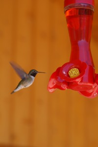 http://www.stockfreeimages.com/5713037/Hummingbird-flying-towards-feeder.html#_